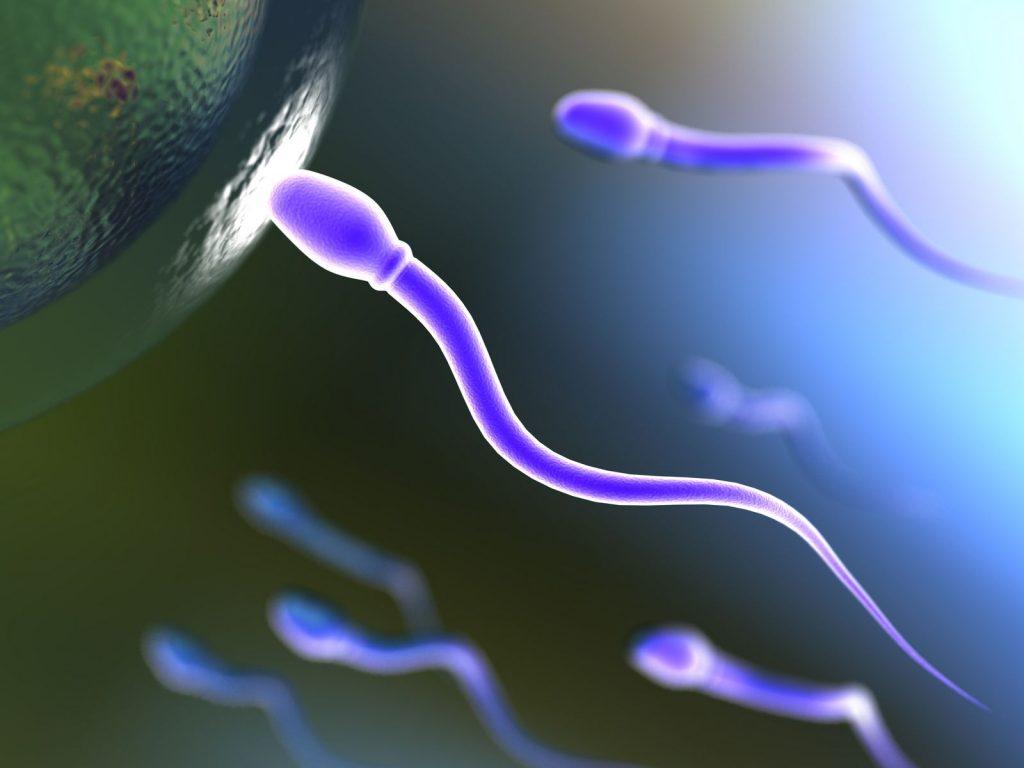 Prueba de fertilidad (Espermiograma)