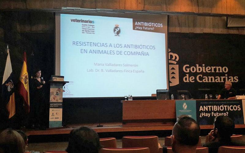 Resistencia antibióticos animales compañia